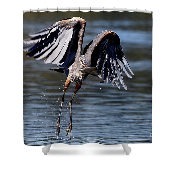Great Blue Heron In Flight With Fish Shower Curtain