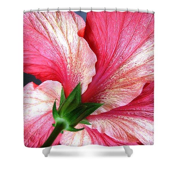 Hibiscus #5 Shower Curtain