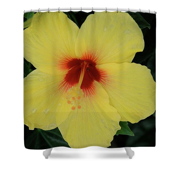 Sun Lover Hibiscus Shower Curtain