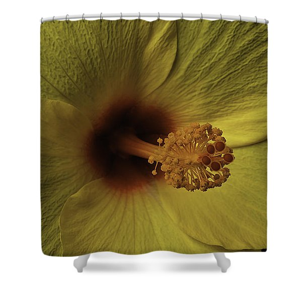 Hibiscus Close Up Shower Curtain