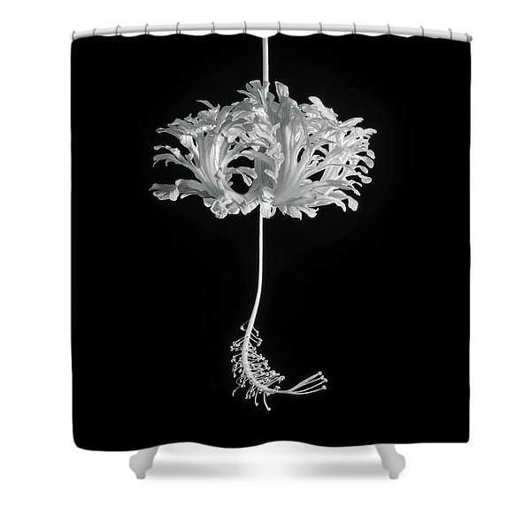 Hibiscus Schizopetalus Against A Black Background In Black And White Shower Curtain