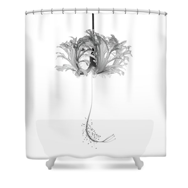 Hibiscus Schizopetalus Against A White Background In Black And White Shower Curtain