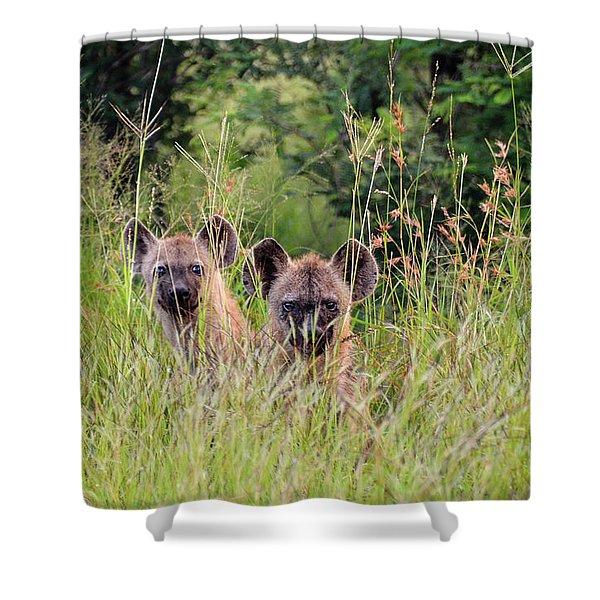 Hide-n-seek Hyenas Shower Curtain
