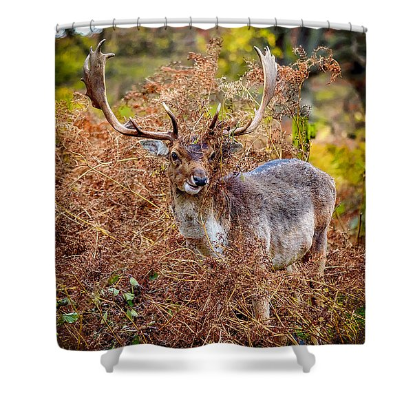 Shower Curtain featuring the photograph Hiding In The Bracken by Nick Bywater