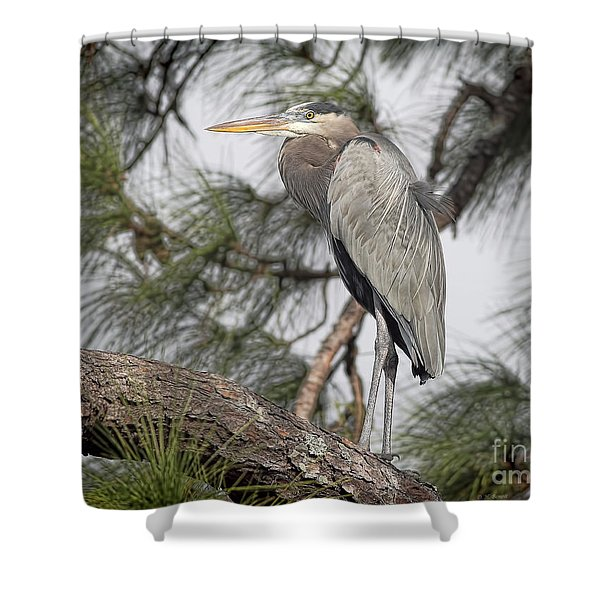 High In The Pine Shower Curtain