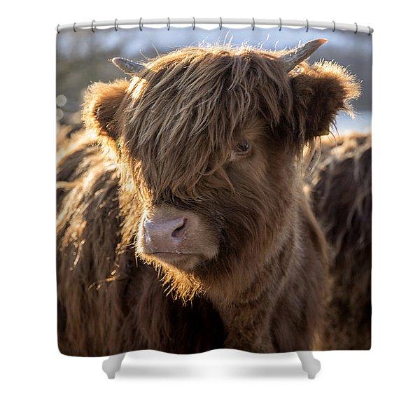 Highland Baby Coo Shower Curtain