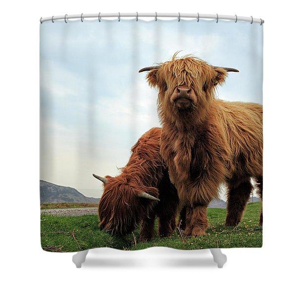 Highland Cow Calves Shower Curtain
