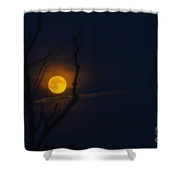 Highland Moon  Shower Curtain