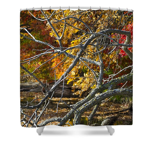 Highly Textured Branches Against Autumn Trees Shower Curtain
