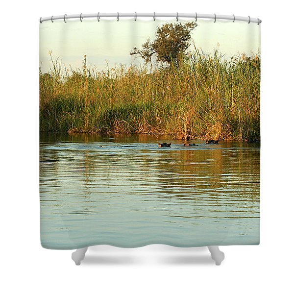 Hippos, South Africa Shower Curtain