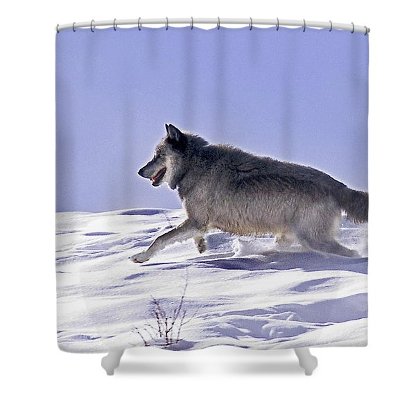 His Majesty Wolf 21m Shower Curtain