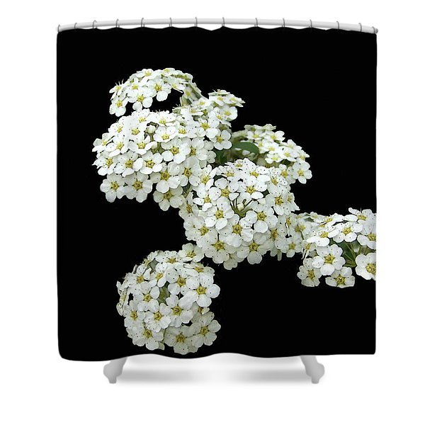 Home Grown White Flowers  Shower Curtain
