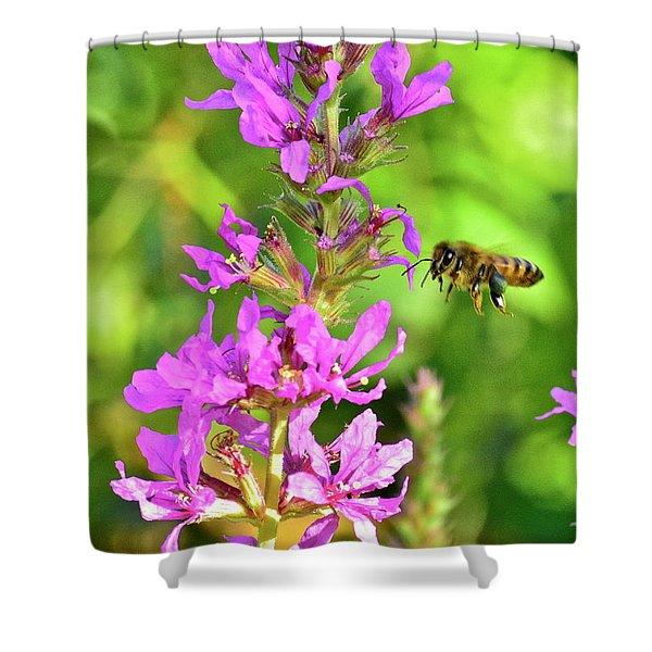 Honey Bee In Flight Shower Curtain