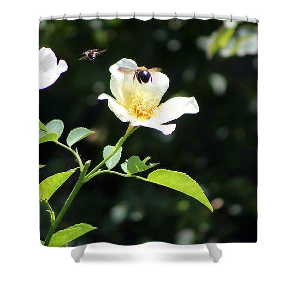 Honey Bees In Flight Over White Rose Shower Curtain