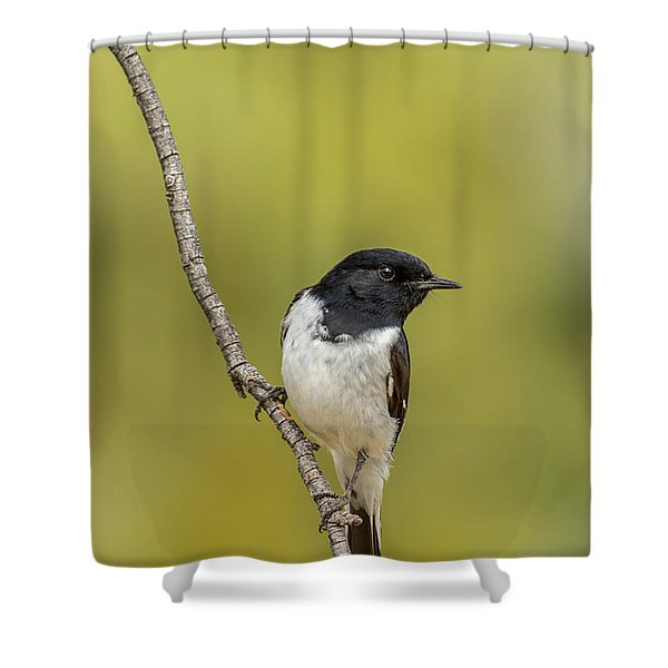 Hooded Robin Shower Curtain