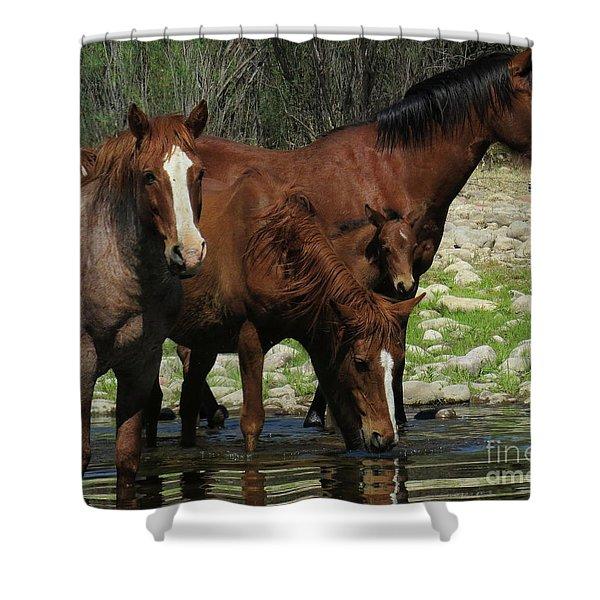 Horse 7 Shower Curtain