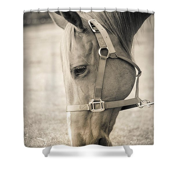 Horse Eating In A Pasture Shower Curtain