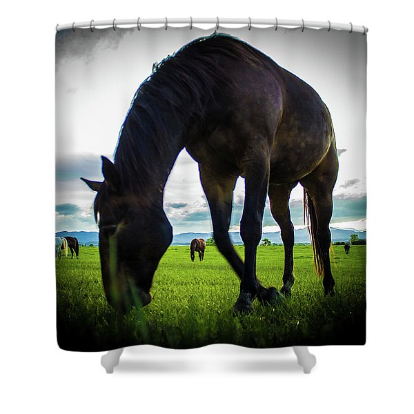 Horse Time Shower Curtain