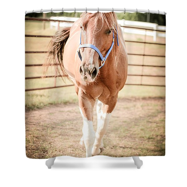 Horse Walking Toward Camera Shower Curtain
