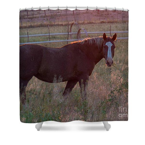 Horses 2 Shower Curtain