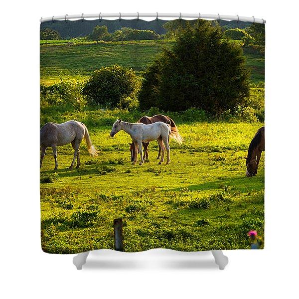 Horses Grazing In Evening Light Shower Curtain