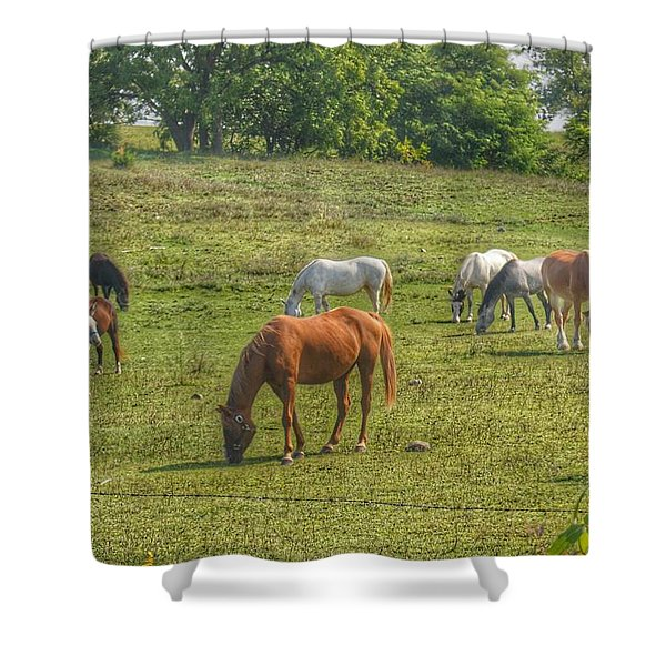 1003 - Horses In A Pasture I Shower Curtain