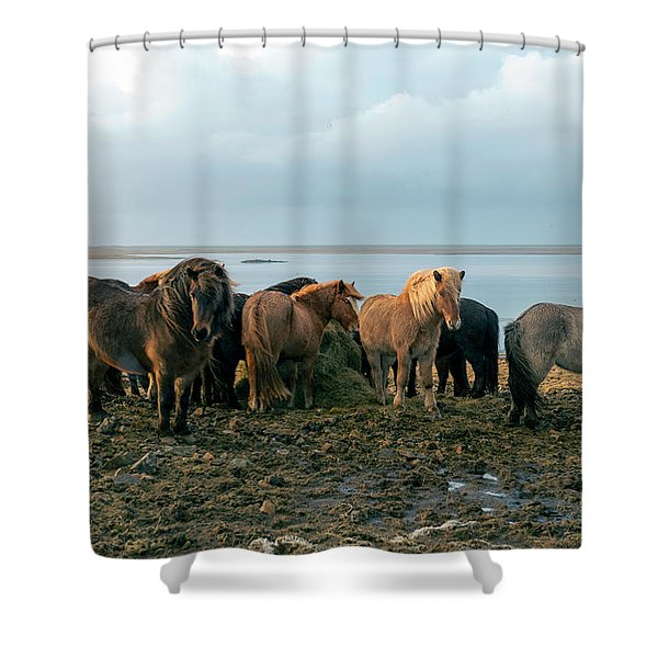 Horses In Iceland Shower Curtain