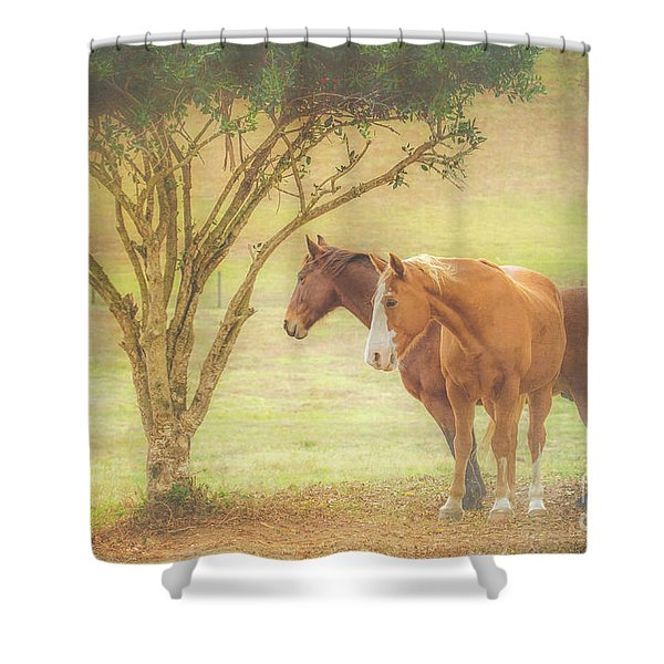 Horses In The Meadow Shower Curtain