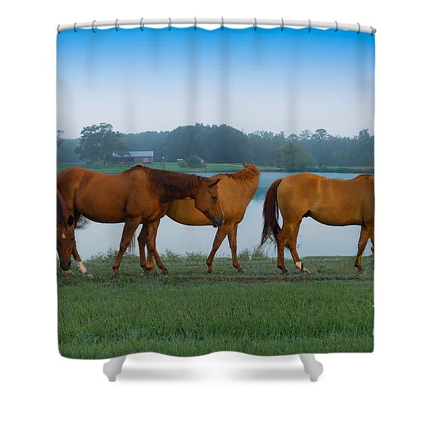 Horses On The Walk Shower Curtain