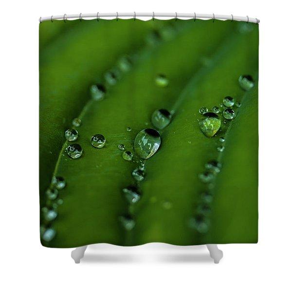 Hostas And Raindrops Shower Curtain