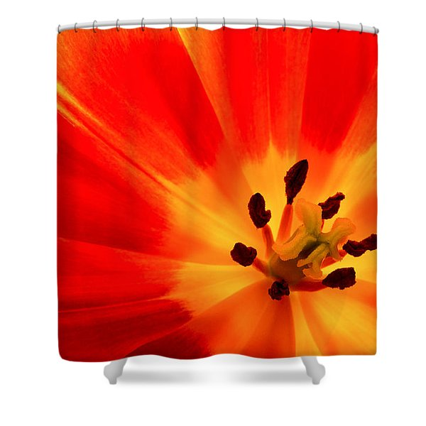 Hot Air Tulip Shower Curtain