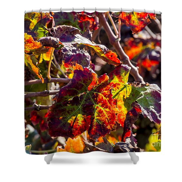Hot Autumn Colors In The Vineyard 04 Shower Curtain