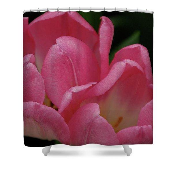 Hot Pink Tulip Shower Curtain