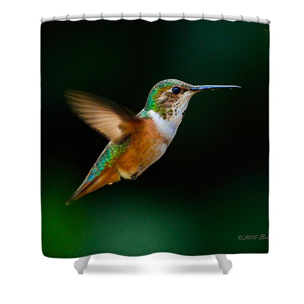 Hovering Allen's Hummingbird Shower Curtain