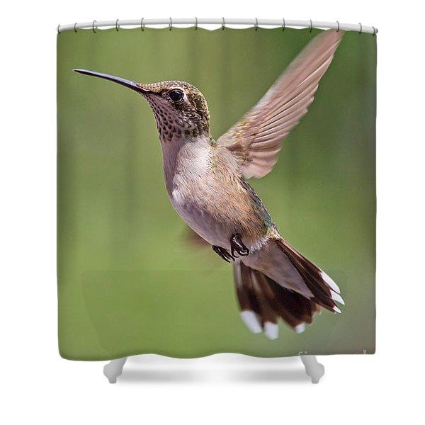 Hovering Hummer 1 Shower Curtain