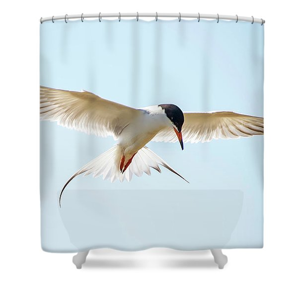 Hovering Tern Shower Curtain