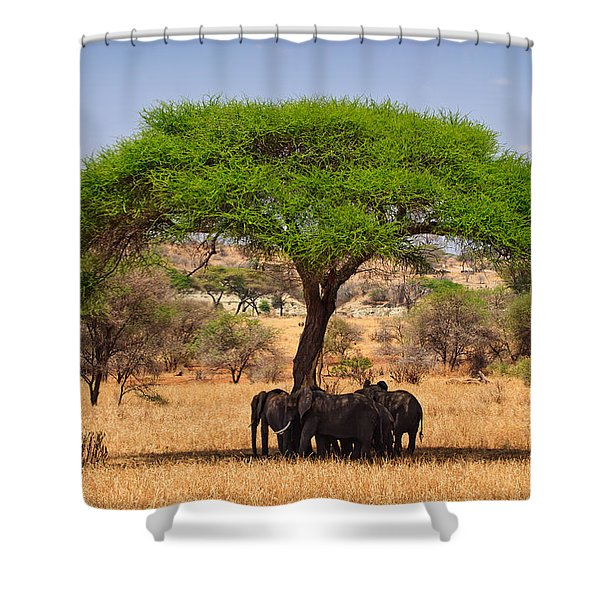 Huddled In Shade Shower Curtain