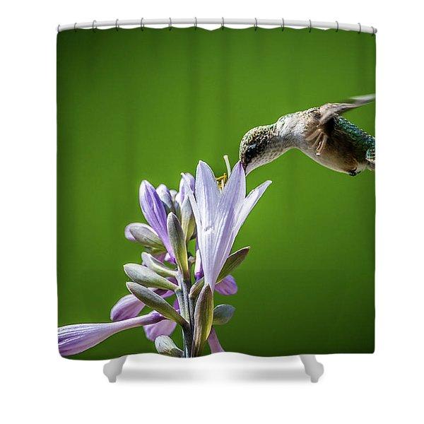 Humming Bird And Hosta Shower Curtain