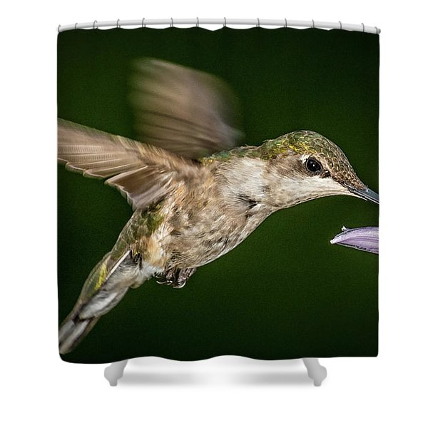 Humming Bird Drinking Shower Curtain