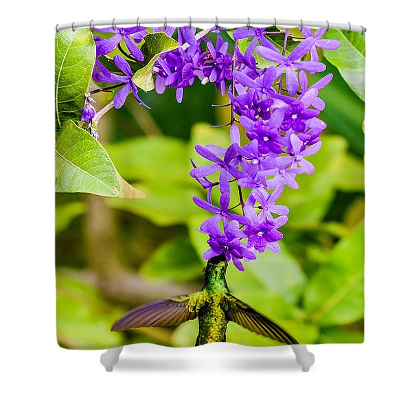 Humming Bird Flowers Shower Curtain