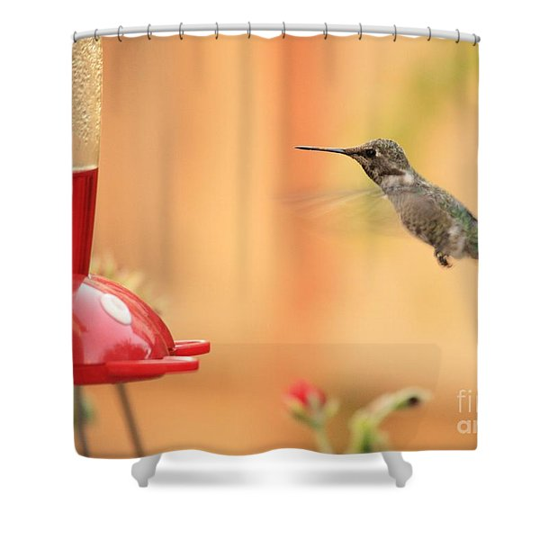 Hummingbird And Feeder Shower Curtain