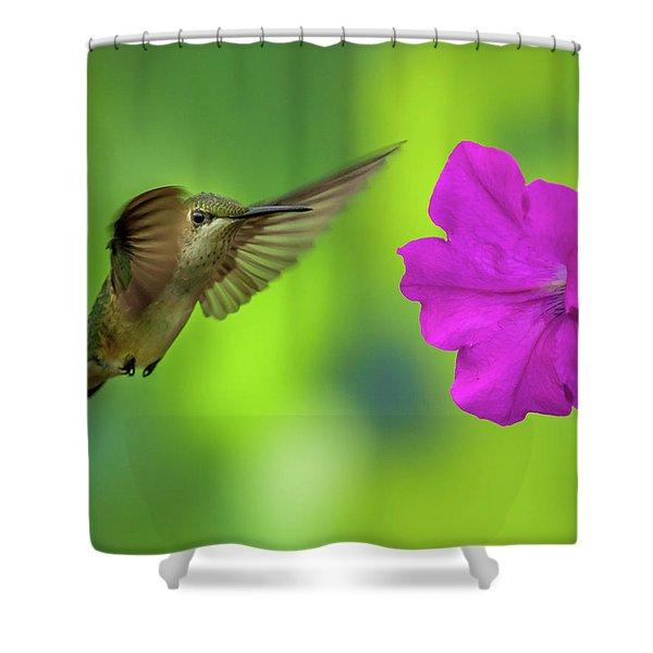 Hummingbird And Flower Shower Curtain