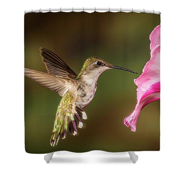 Hummingbird And Hibiscus Shower Curtain