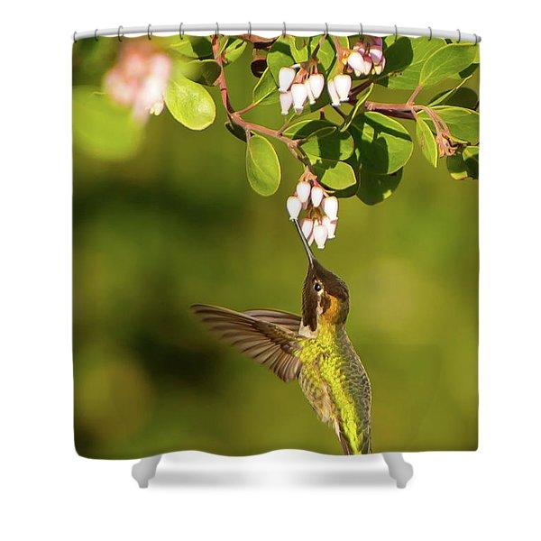 Hummingbird And Manzanita Blossom Shower Curtain