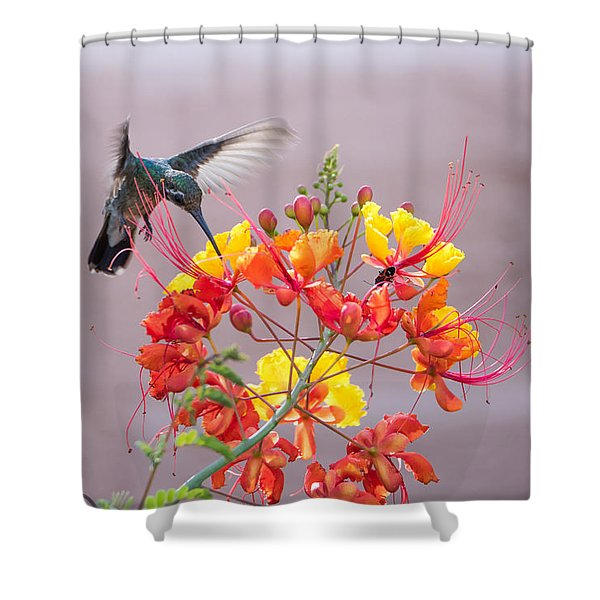 Hummingbird At Work Shower Curtain