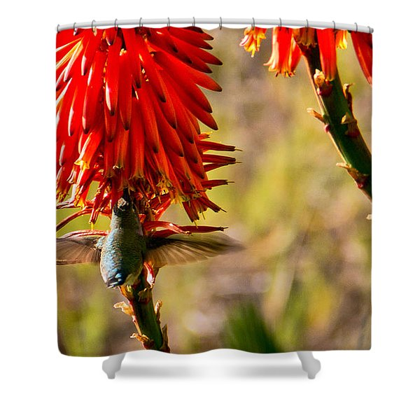 Hummingbird Feeding Shower Curtain
