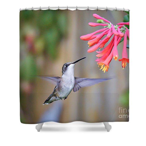 Hummingbird Happiness 2 Shower Curtain