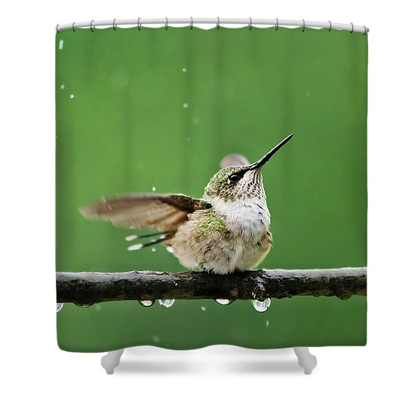 Hummingbird In The Rain Shower Curtain