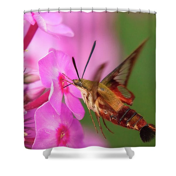 Hummingbird Moth Feeding 1 Shower Curtain