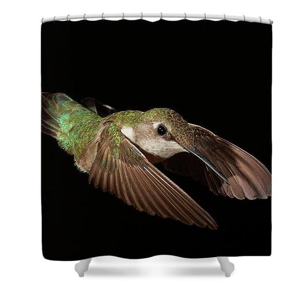 Hummingbird On Black Shower Curtain